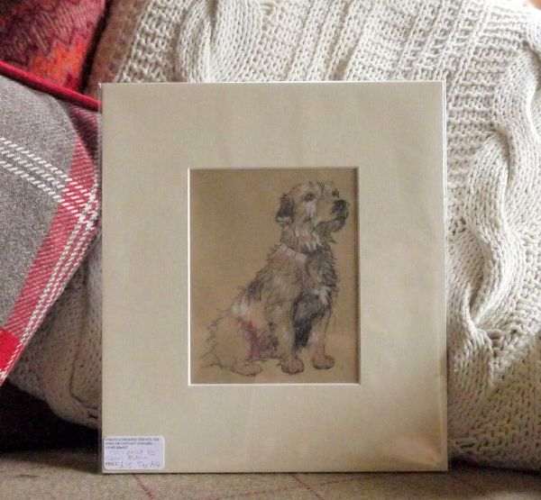 White Fluffy Terrier, 1930's print by Cecil Aldin - Ter A4